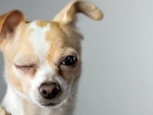 cachorro-louco-2