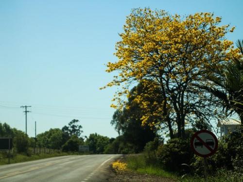 primavera (1) (Copy)
