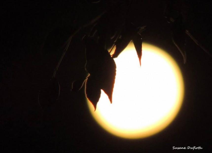 super lua (1)