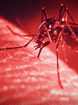 Dengue Erechim