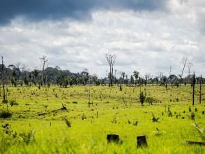 Colniza, MT, Brasil: Área degradada no município de Colniza, noroeste do Mato Grosso.  (Foto: Marcelo Camargo/Agência Brasil)