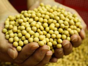 grãos agronegocio sementes agricultura