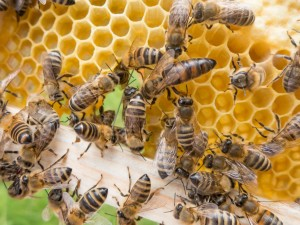 abelhas mel
