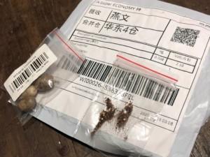 sementes-vindas-da-china-sem-consentimento-cidasc-1-min (1)