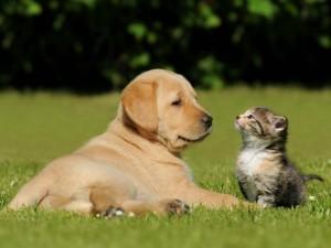 Foto-1_Cachorro-e-gatos-devem-ser-fotografados-a-um-nível-de-altura-adequadoa-eles-e-para-isso-o-fotógrafo-deve-se-abaixar-se-agaixar-se-sentar-ou-mesmo-deitar-no-chão